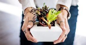 Les 3 meilleurs sites de vente de plantes en ligne